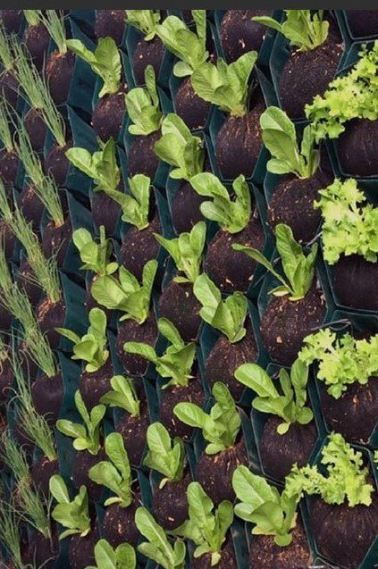 Growup-living-greenwall-system-farm-veggies-herbs-project